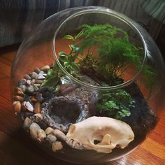 Terrarium with skunk skull and geode