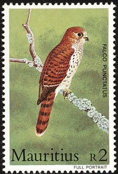 Mauritius Kestrel stamps - mainly images - gallery format