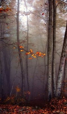 Autumn Colours by Fadi Tarawneh Dark Autumn, All Nature, Graphic, Beautiful World, Beautiful Days, Autumn Leaves, Mother Nature, Mists, Scenery