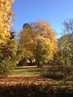 Autumn, nyby gård Uppsala Sweden