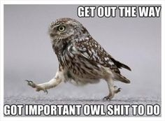 Funny owl, owl humor, hilariousness, humour animal, jokes funny …For the funniest pictures and jokes funny visit www. Humor Animal, Funny Animal Memes, Funny Animal Pictures, Funny Animals, Cute Animals, Crazy Animals, Funniest Pictures, Funny Images, Animal Sayings