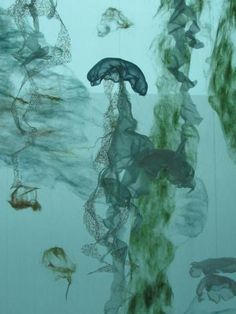 New species of jellyfish lives in Portland International Airport