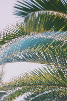 Sunshine, Surf, & San Onofre | Free People Blog #freepeople