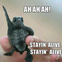 Ah, Ah, Ah, Stayin' alive, stayin' alive..