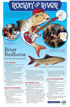 Students team up with Michigan Sea Grant to protect native fish - MSU Extension Muskegon River, Lake Sturgeon, Rocky River, Hero Poster, Environmental Education, Poster Series, Great Lakes, Nativity, Michigan