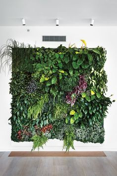 Awesome Live Plant Wall Art