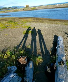Long shadows and delightful company at Hallo Bay Wilderness Camp.