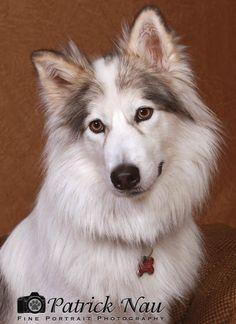 Native American Indian dog.