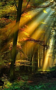 *+*Mystickal Faerie Folke*+*... Golden Sun Rays, Schwarzwald, Germany... By Artist Unknown...