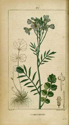 Illustration Botanique, Botanical Illustration, Impressions Botaniques, Natural Curiosities, Botanical Prints, Natural History, Chinoiserie, Vintage Images, Animal Kingdom
