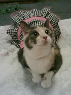 Sprinkles loves her dress.  Cats in clothes are cute