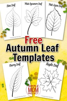 With Autumn here, are you looking for a set of simple to use