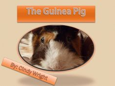 It covers the history of the guinea pig, plus health and care.    Suitable for a child wanting their first pet, or a keen guinea pig lover.    This book is based on research and my own guinea pig experience.