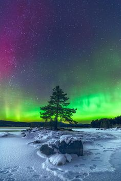 ~~Timeless | Aurora borealis lone tree landscape |  by lonekheir~~ Beautiful Sky, Beautiful Landscapes, Beautiful Places, Nature Pictures, Snowy Pictures, Lone Tree, Star Sky, Natural Phenomena, Milky Way
