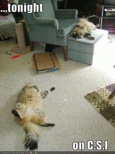 humorous cats