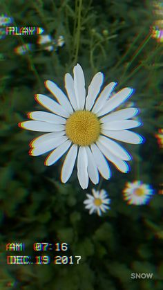 💛 I wanna pick you a bunch of wild flowers 💛