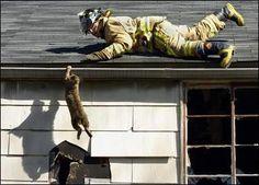 firefighter saving a kitty