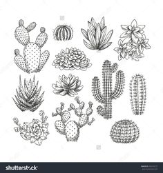 Find Cactus Collection Sketchy Style Illustration Succulent stock images in HD and millions of other royalty-free stock photos, illustrations and vectors in the Shutterstock collection. Thousands of new, high-quality pictures added every day. Art And Illustration, Illustration Cactus, Botanical Illustration, Succulents Drawing, Cactus Drawing, Tatouage Xo, Kaktus Tattoo, Doodle Art, Art Drawings