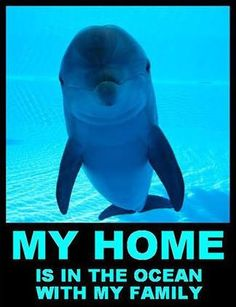 Dolphins  Animal rights