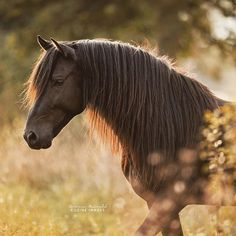 One of the most beautuful horses I've ever seen
