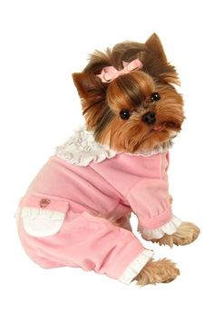 Sweety Jumper - lots of cute pups and cute things for them!