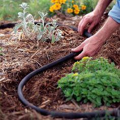 Proper Shrub Maintenance for Colorado Gardens | Lifescape