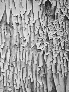Tree Bark - peeling cracked texture inspiration; organic patterns in nature