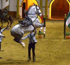 Momento del espectáculo en la Real Escuela Andaluza de Arte Ecuestre, sin duda algo que no se puede dejar de visitar! - Jerez de la Frontera - Spain