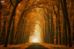 """Autumn Dreams II - Autumn Dreams, Lochem, the Netherlands.  And an other photo of one of my favorites lanes in the Netherlands. Have a nice weekend!  <a href=""""http://facebook.com/martinpodtphotography"""">Facebook</a> 