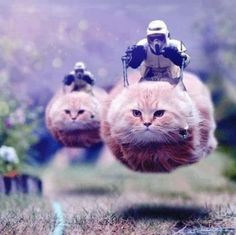 @kimberleycutler This is us... Bahahaha.  Save a starship, ride a tabby. -Stormtrooper