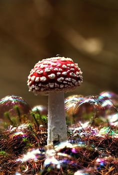 This is gorgeous! Toadstool and bubbles.