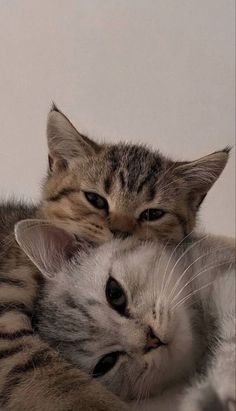 Cute Baby Cats, Cute Little Animals, Cute Funny Animals, Cute Kitty, Funny Cute Cats, Cute Cats And Kittens, Photo Chat, Cat Aesthetic, Tier Fotos