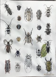 23 Black bugs