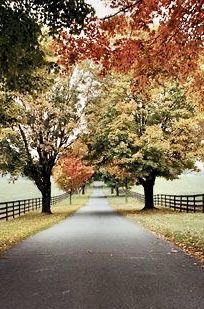 If you could plan your perfect fall getaway in Virginia, what destinations would you include? This article will have you daydreaming through Charlottesville and Middleburg with mentions of superb dining, award-winning wineries and luxury accommodations. Santorini, Beautiful World, Beautiful Places, Beautiful Pictures, Beautiful Roads, Wine Country, Country Roads, Virginia Is For Lovers, Take Me Home