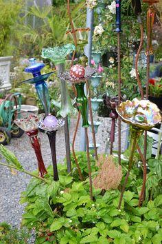 The Outlaw Gardener: DIG! Meanwhile back on Vashon Island...