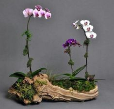 Best Orchid Arrangements With Succulents And Driftwood (45)
