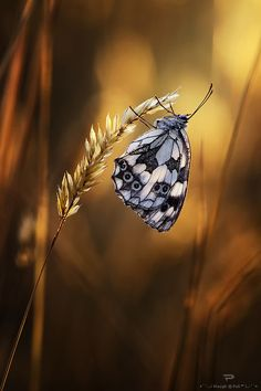 ~~Sighlight ~ butterfly bokeh by waugh~~
