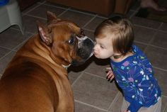 photos of boxer dog, boxer puppies Boxer And Baby, Boxer Love, My Babysitter, Dog Rules, All You Need Is Love, Your Best Friend, Funny Cute, Fur Babies, Cute Animals