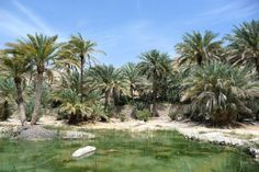 Oman Rundreisen und Hotels | Jetzt Urlaub buchen |Tai Pan Oman Hotels, Rub' Al Khali, Sultan Qaboos, Salalah, Top Hotels, Resort Spa, Strand, Dubai, Golf Courses