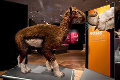 """A Macrauchenia model can be found in The Field Museum's """"Extreme Mammals"""" exhibit."""