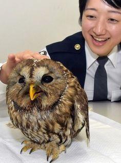 負傷フクロウ、登校中の小学生が保護 年の瀬は署で迎えることに 福岡