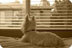 The White Dog Blog: Anybody seen my dad?