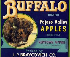 Buffalo Brand Apple Fruit Crate Label, Watsonville, CA, Vintage Labels, Vintage Ads, Vintage Prints, Vintage Posters, Buffalo Brand, Label Art, Apple Crates, Fruit Crates, Vegetable Crates