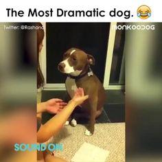 Funny Animal Photos, Funny Animal Jokes, Funny Dog Memes, Funny Dog Videos, Cute Animal Videos, Cute Animal Pictures, Really Funny Memes, Funny Animal Pictures, Funny Animal Sayings