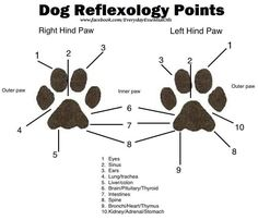 handy reflexology reference for using oils with your dogs