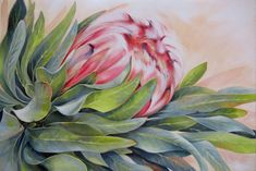 """Protea found in the Western Cape, South Africa 'Nestled"""" Oil on Canvas 80cm x 60cm Protea Laurifolia The first of a set of three #Protea#Painting#Western Cape"""
