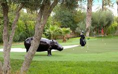 Marrakech est LA ville du golf avec plus de 10 golfs en activité.. certaines villas à louer à Marrakech en exclusivité sont situées en bordure d'un parcourt de golf, d'autres ont même un putting dans leur jardin !