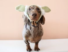 Who wants to go on a canine cruise with us? Plus, all our other Fido-friendly finds this week. Diy Dog Costumes, Star Wars Costumes, Cute Halloween Costumes, Halloween Diy, Funny Dogs, Stars, Animals, Animales, Animaux