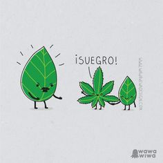 Uploaded by Jocelyn Muñoz . Find images and videos about boyfriend, weed and marijuana on We Heart It - the app to get lost in what you love. Funny Puns, Funny Facts, Hilarious, Funny Stuff, Smiles And Laughs, Just For Laughs, Planet Hemp, Satirical Illustrations, Spanish Jokes