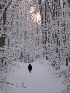 Solitude.  Walking in the snow is the best. You can hear a pin drop. You and nature.....
